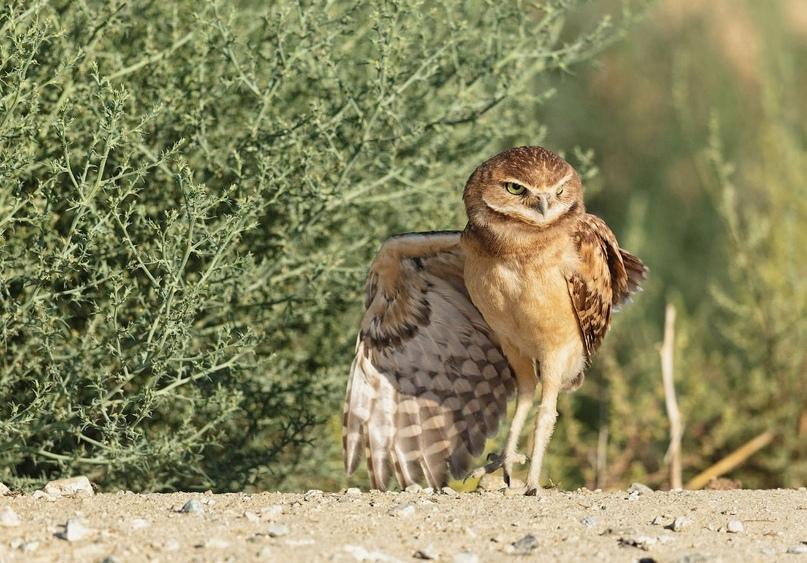 Супер совы, изображение №3