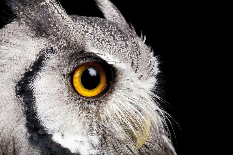 Супер совы, изображение №9