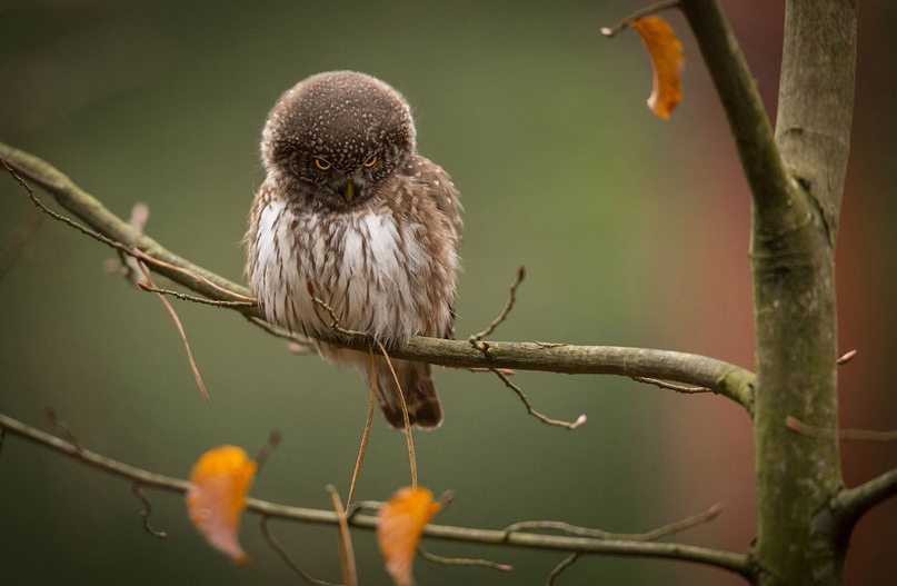 Супер совы, изображение №10