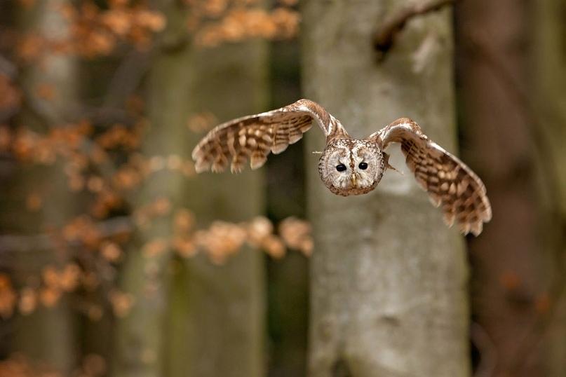 Супер совы, изображение №19